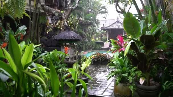 tropical rain in asian garden, bali indonesia, rainy season ...