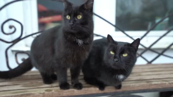 Two Funny Cute Domestic Black Cat Playing On The Bench Outdoors