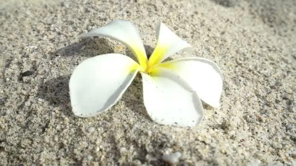 ženská ruka zvednout bílý květ v písku, pojem ekologie, zelená země katastrofy zničen, globální oteplování, suché sucho, znečištění, Žena najít poslední naděje, změna klimatu vyprahlá krajina poušť