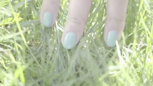 női kéz érintése zöld fű tavasszal tevékenységek, csodálatos világ természet szépségét rét