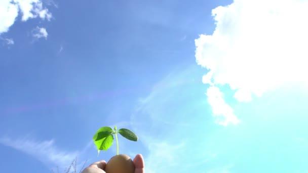 samičí ruka drží zelenou rostlinu v květináči na pozadí modré oblohy, klíčení koncept