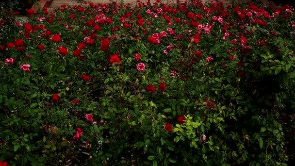 Květinová kytice růží kvetoucích, červené růže listy zelené.