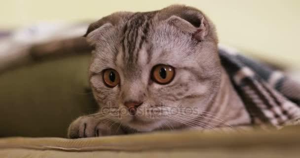graue Katze trickst und gibt weißem Kerl eine hohe Fünf