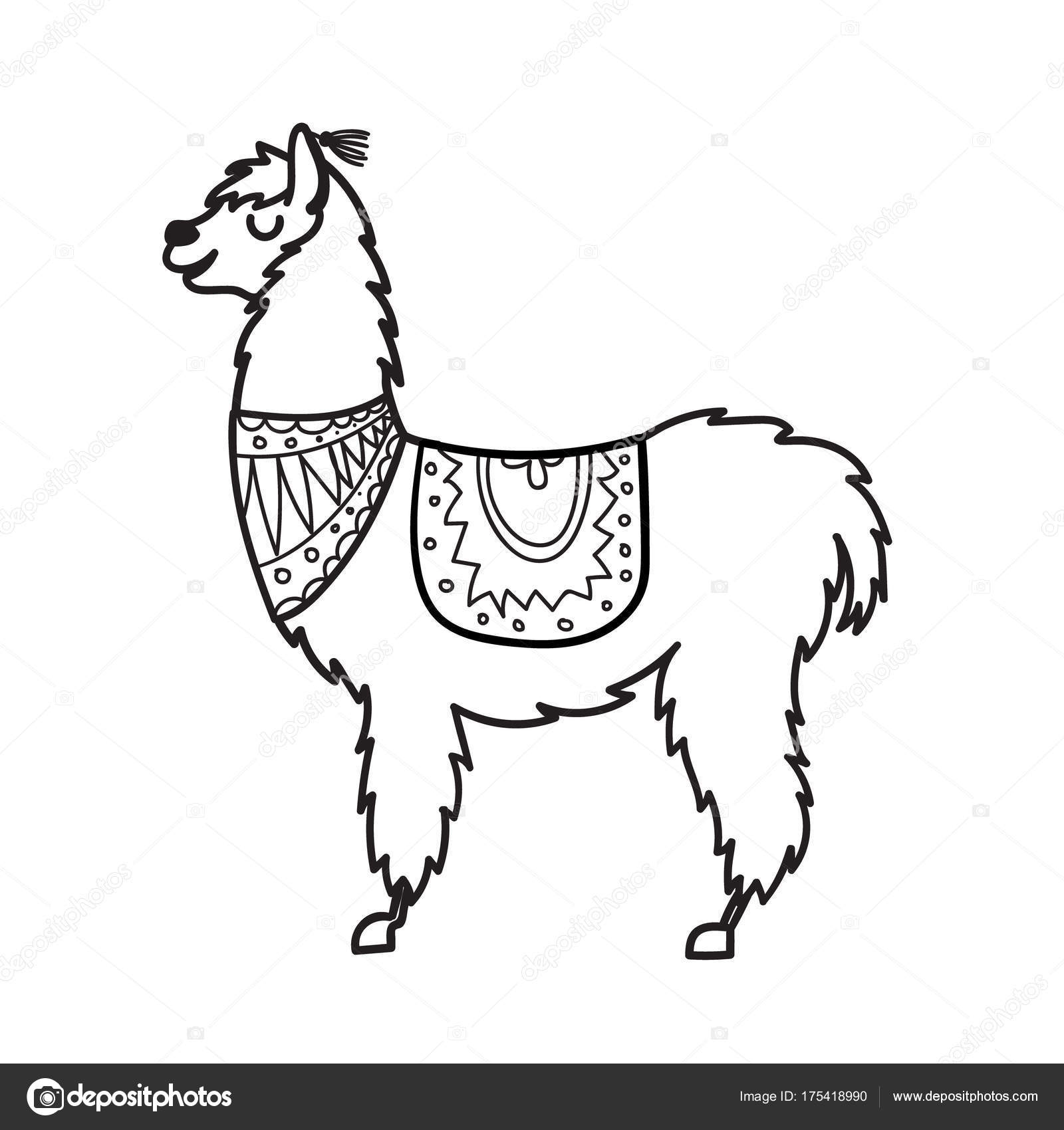 Line Drawing Llama : Vector illustration of cute character south america lama
