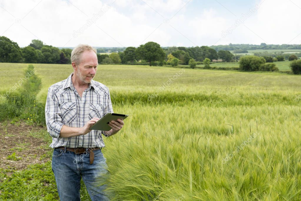 Man in Wide Wheat Field Using a Tablet Computer