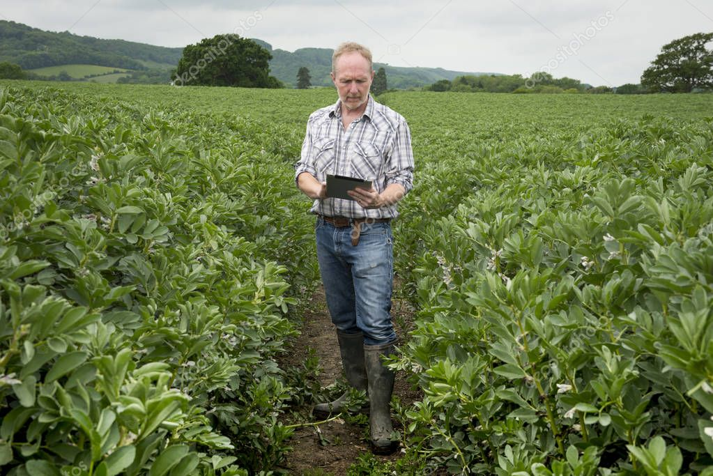 Farmer with Tablet Computer in the Middle of Farm Field