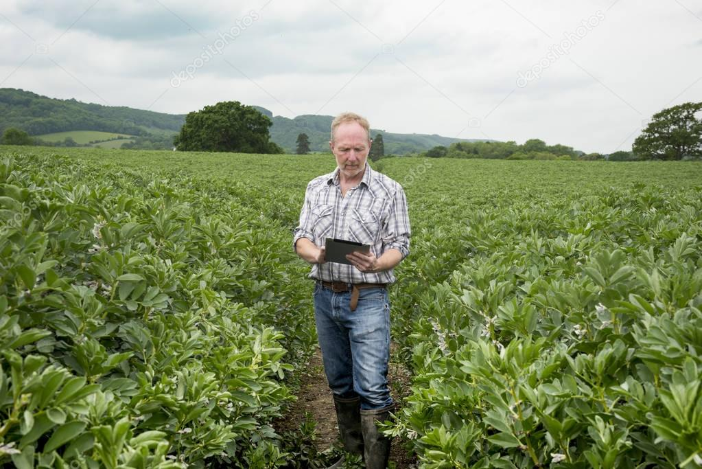 Man with Mobile Device in the Middle of Farm Field
