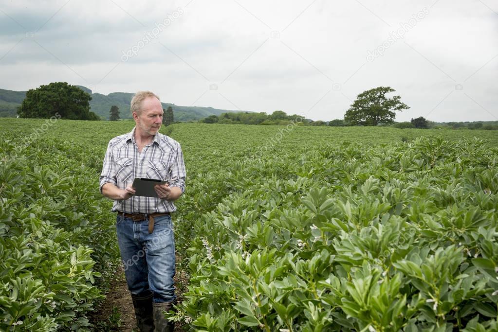 Farmer Holding Tablet Computer Looks to Dense Vegetation