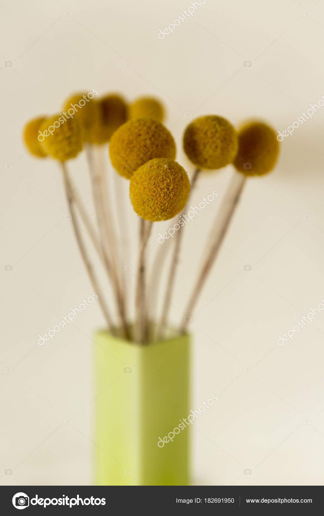 c220a65c93 Botões de Billy secas em vaso retangular verde — Stock Photo © stock ...