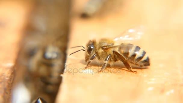 Makroaufnahme von Bienen, die an einem sonnigen Tag in einem Bienenstock auf einer Holzoberfläche krabbeln