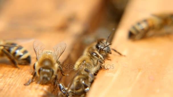 Keresek valami egy méhkas fafelületre méhek makro lövés