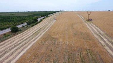 Aerial shot of a combine harvester reaping ripe wheat near  a green garden