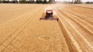 Aerial shot of a combine harvester reaping ripe wheat in Ukraine in summer