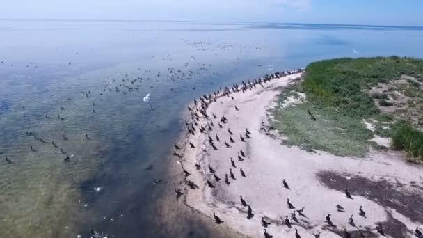 Letecký snímek racky a kormoránů nad písčitou pláž Dzharylhach