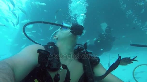 ein eindrucksvoller Blick auf zwei Taucher, die im Mittelmeer schwimmen und große silberfarbene Fische in Slo-mo füttern