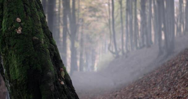 Starý strom s mechem a silnici v lese podzimní mlha