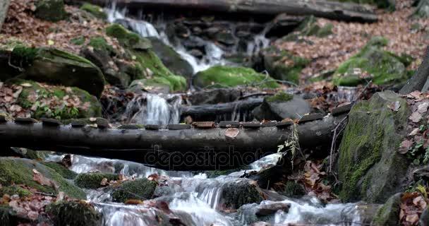 una cascata nella foresta di autunno di montagne con rocce coperte di muschio e fogliame giallo