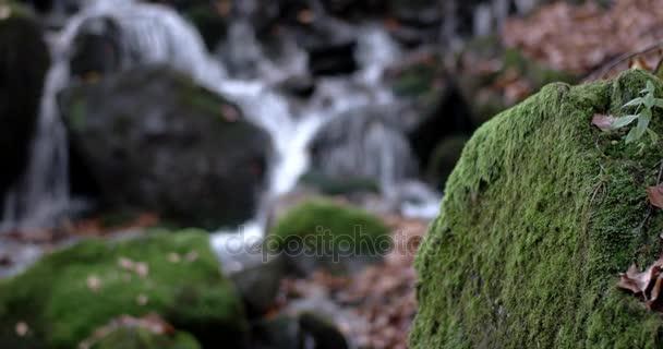 a vízesés a hegyekben őszi erdőben, és sárga lomb- és mohás sziklák