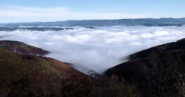 Mattina di autunno nebbioso foschia che aumenta sopra pino e faggio coperto Carpathian Mountain Ridge ot alba