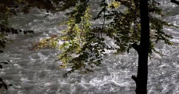 Foglie di autunno in un fiume di montagna fangoso Scenic