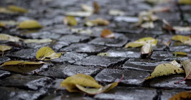 Podzimní déšť na listech na Dlažební kámen ve veřejném parku