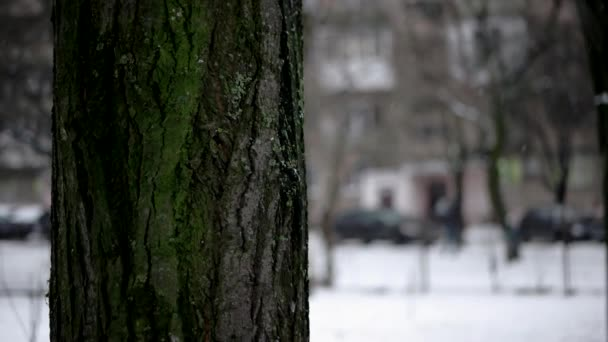 a Shallow Depth of Field Focused on the Moss on a Tree Trunk in the Park While it is Snowing With Blurred Background