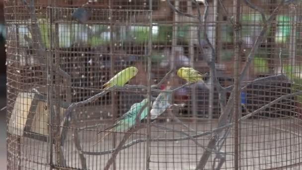 papoušek v kleci pro ptáky