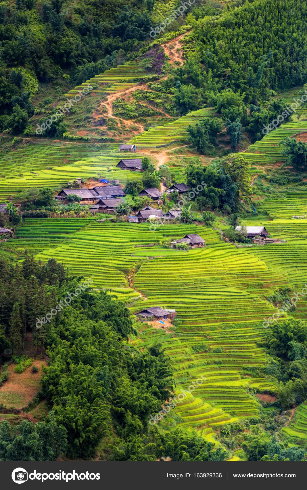 Couches De Rizières Dans La Lumière Du Soleil à Sapa Vietnam