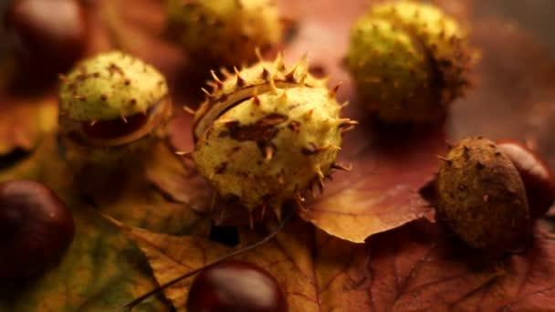 Jírovce ležící na javorové listy