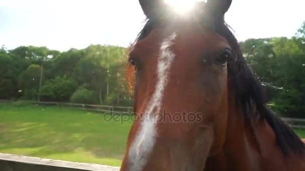 Horse face close-up, backlight.