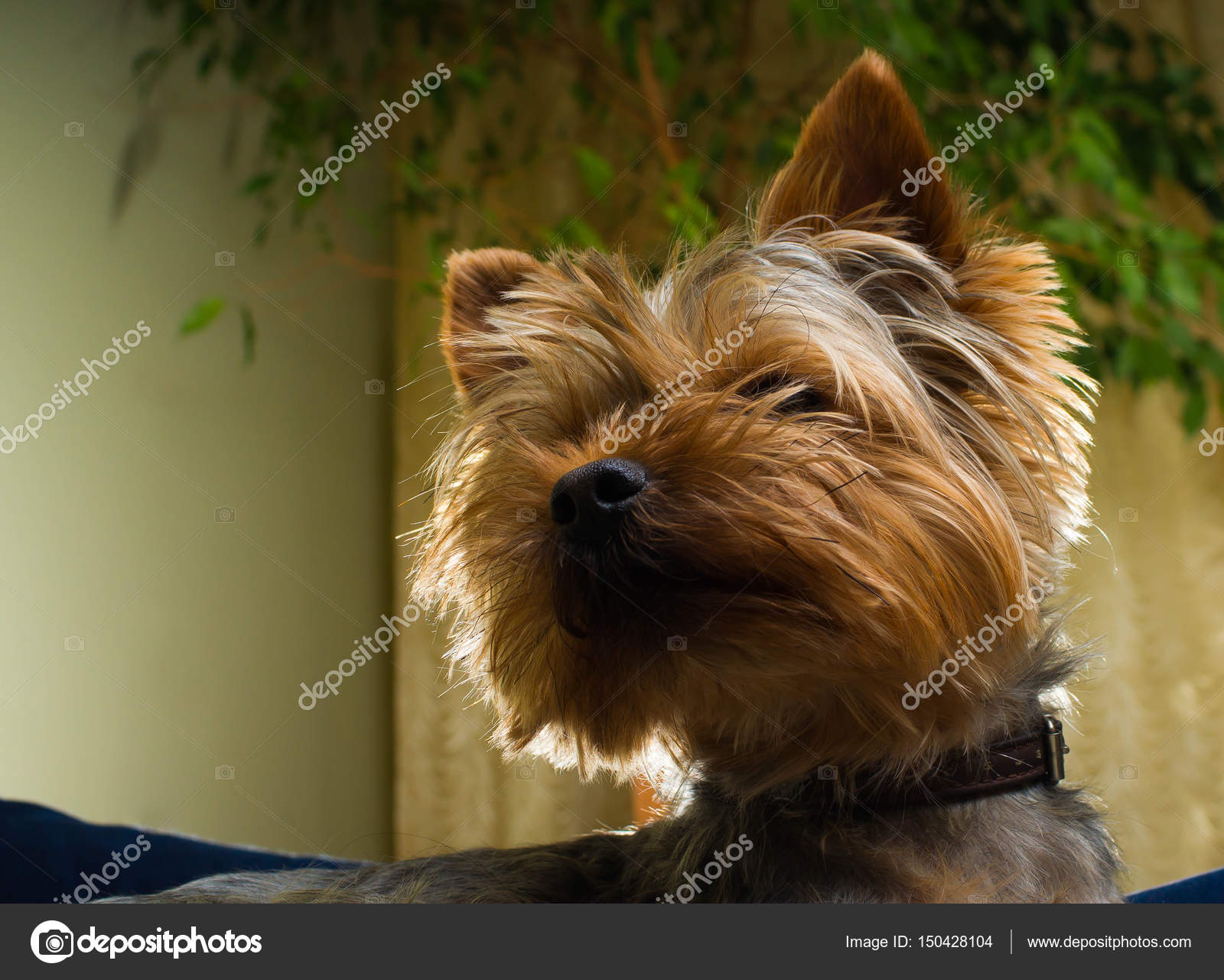 Hond Vriendelijke Tuin : Ecologisch tuinontwerp