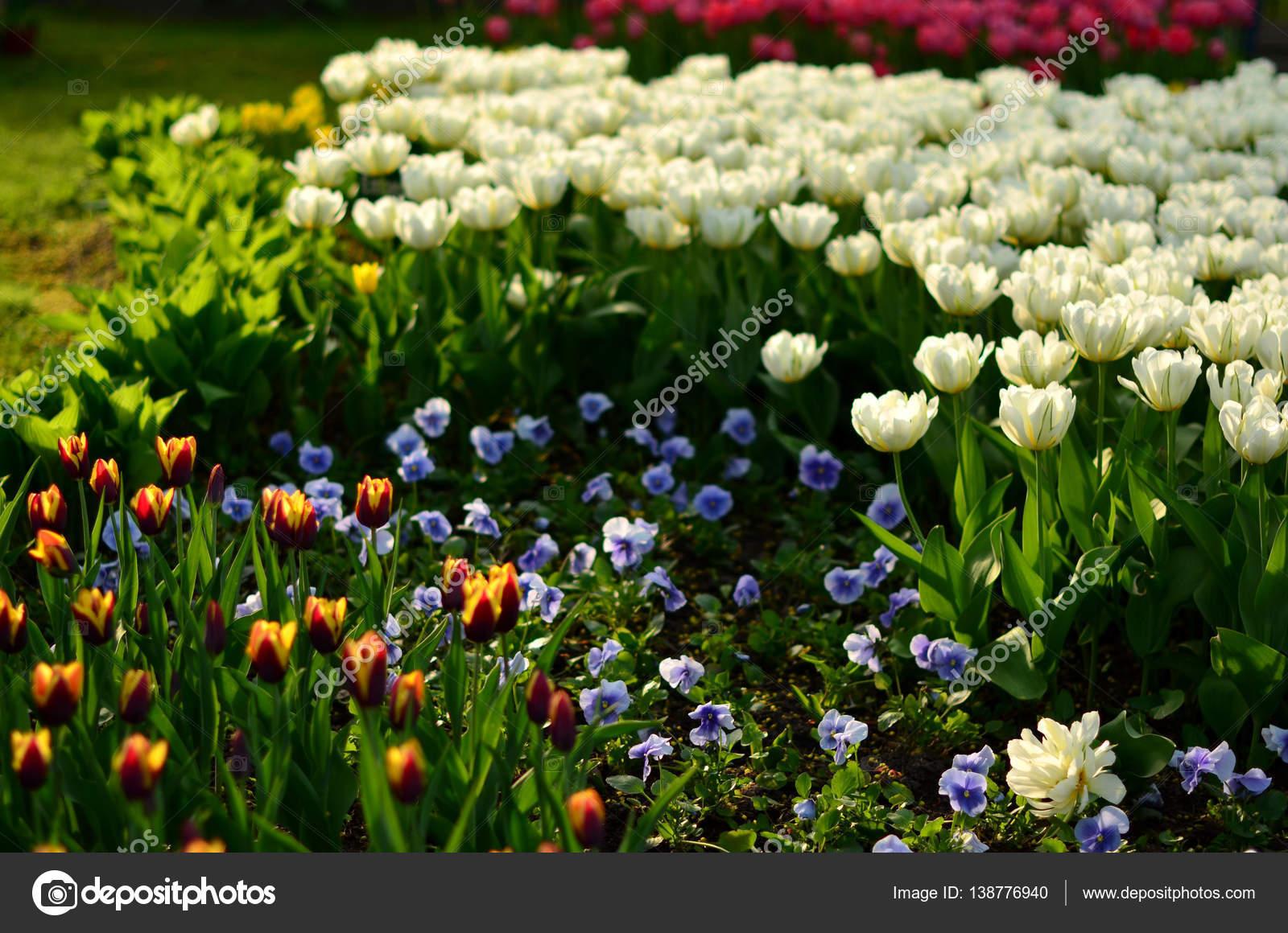 Fleurs De Printemps Magnifique Qui Poussent Sur Le Parterre De
