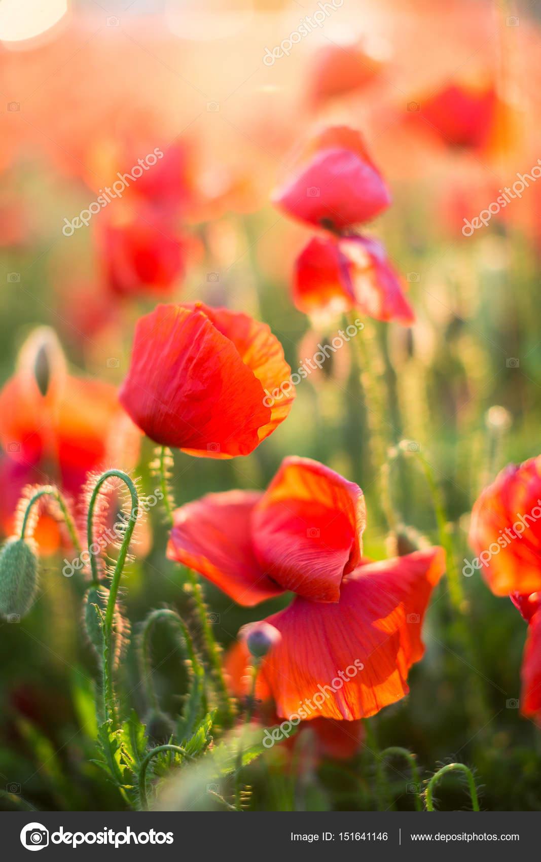 Natura primavera fiorisce il concetto di fiori primo for Concetto aperto di piani coloniali