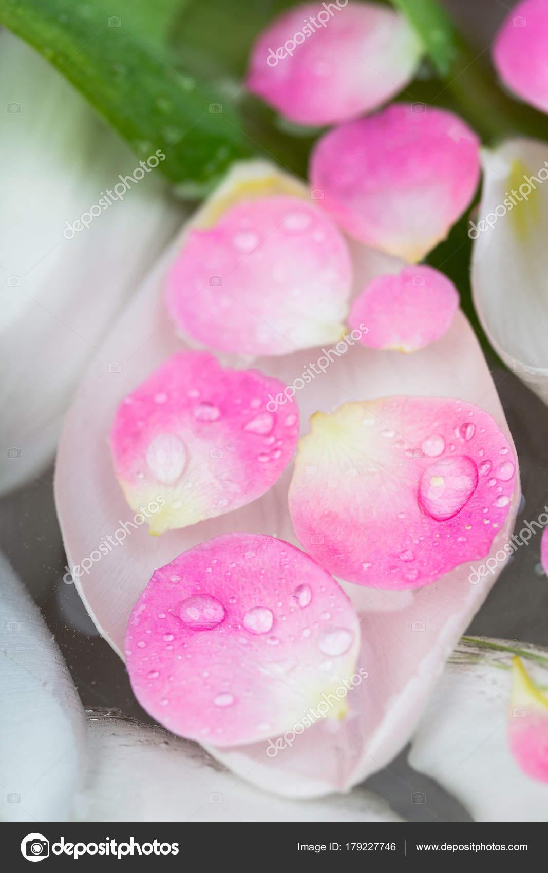 Blumenschmuck Dekoration Spa Konzept Es Gibt Einige Kleine Rosa