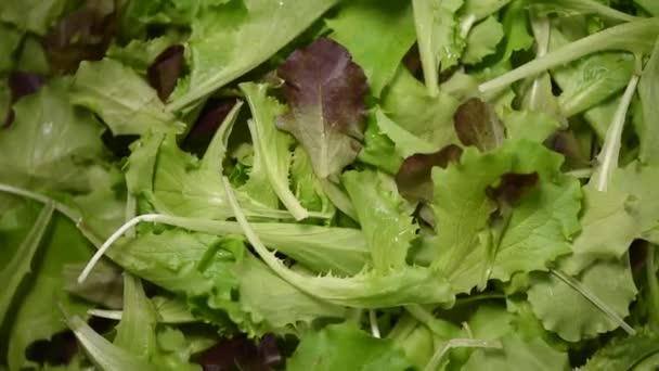 Zelený salát zanechává pozadí. Syrová organická zelenina. Horní pohled. Veganská strava a vegetariánská strava.