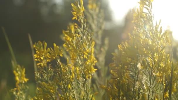 Pole s divokých trav při západu slunce. Krásné letní krajina, venkovské přírody