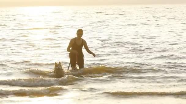 Szibériai husky kutya a strandon játék nő