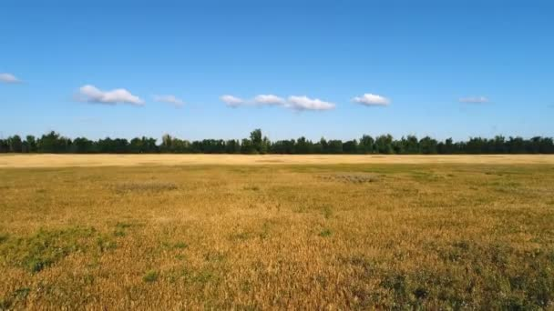 Krásný zemědělskou krajinu s pšeničné pole a les. Letecký pohled na pole