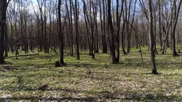 natáčení jasného jarního lesa z helikoptéry