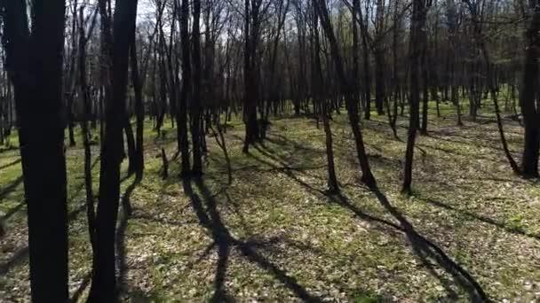 dunkler Wald wie im Märchen, Schießen im Hubschrauber