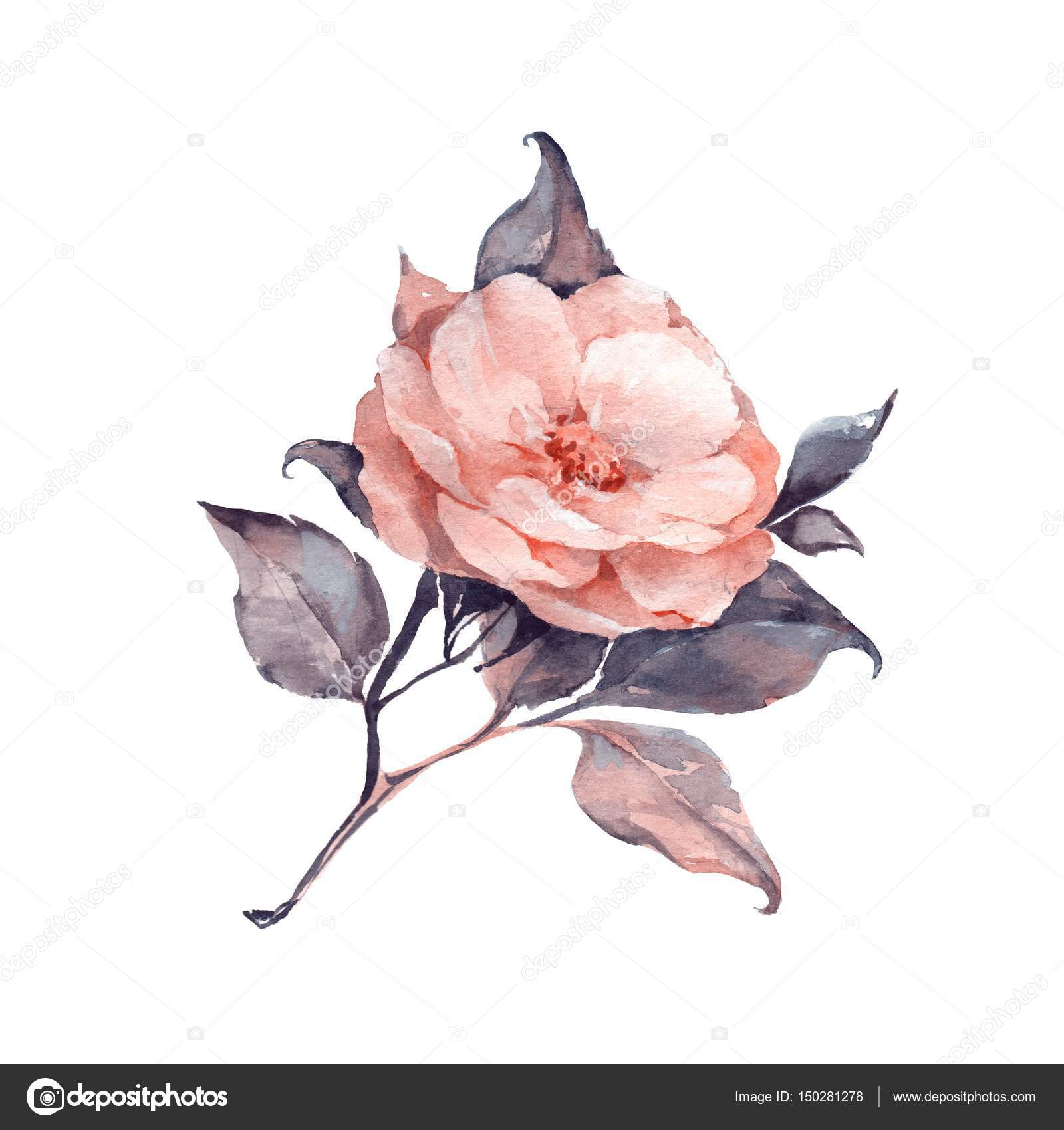 Single Flower Watercolor Stock Photo