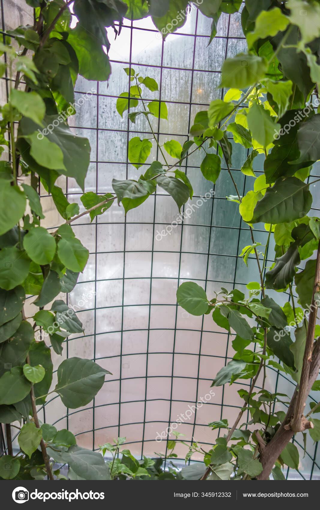 Рамка из лианы под пленкой