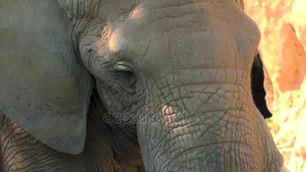 Egy forró nyári napon, próbál szocializálódnak, ultra hd 4k, valós időben a sivatagi elefántok csoportja