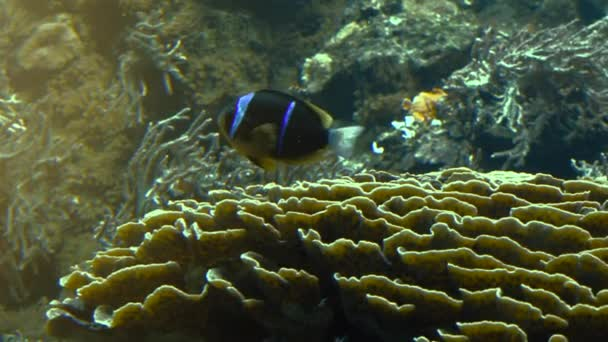 Barevné tropické ryby plavat u jiných mořských živočichů, ultra hd 4k, skutečné tme