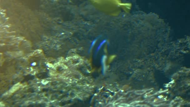 Coloratissimi pesci tropicali nuotare vicino a altre forme di vita marine, ultra hd 4K, real tme