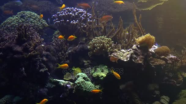 Colorful tropical fish swim near other marine life, ultra hd 4k, real tme