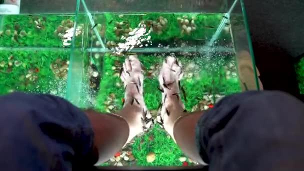 Garra Rufa Fischfußpflege mit natürlichem Peeling und Massage. Dabei scheiden sie spezielle Enzyme aus, die die Regeneration fördern und die Hautelastizität verbessern. Fische suchen sich nur geschädigte Hautpartien aus.