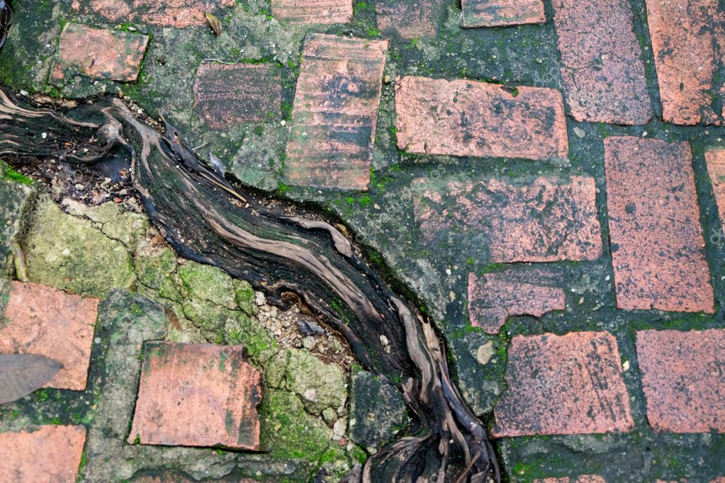 Wet and green algae on brick floor with root of tree background.