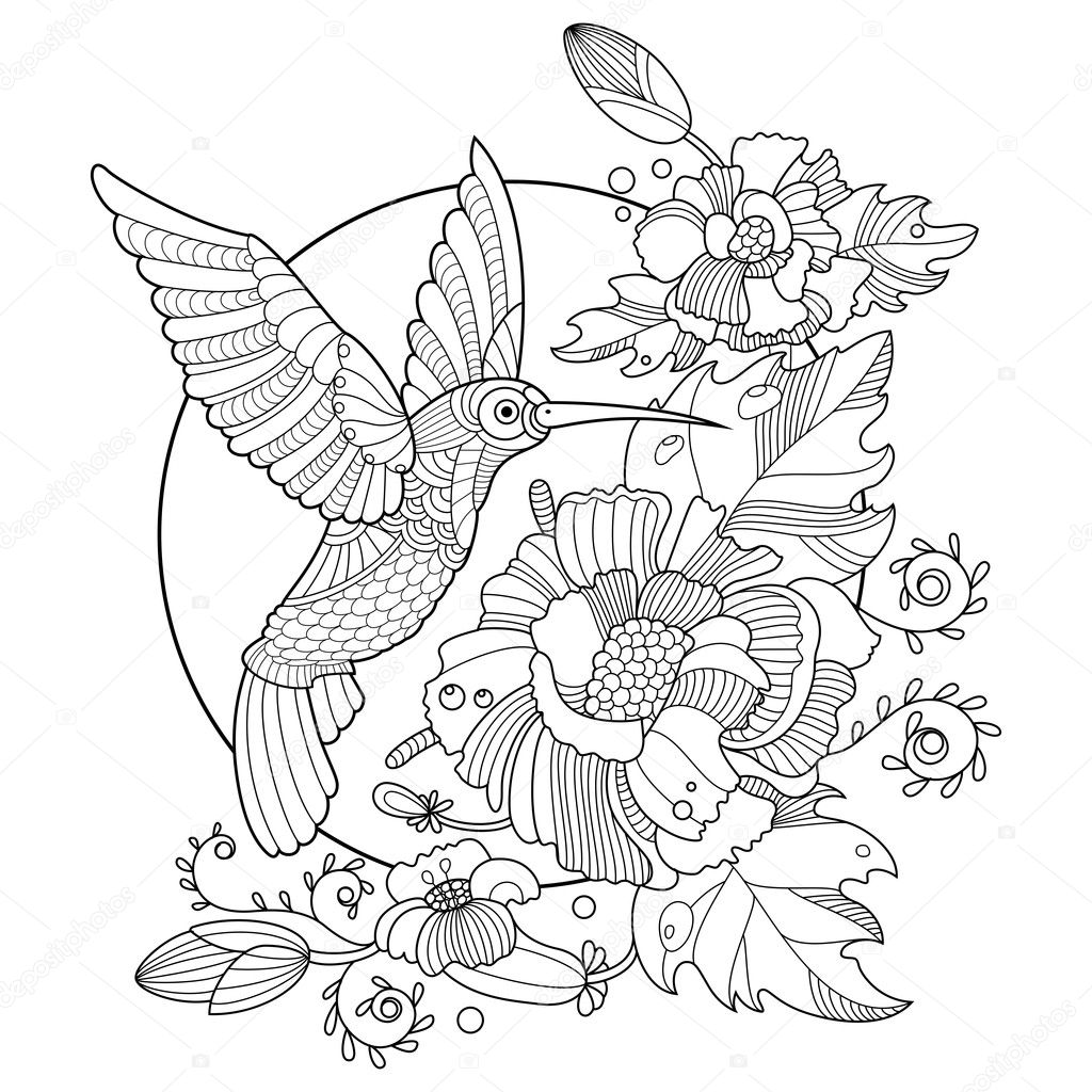 Hummingbird coloring book for adults vector — Stock Vector ...