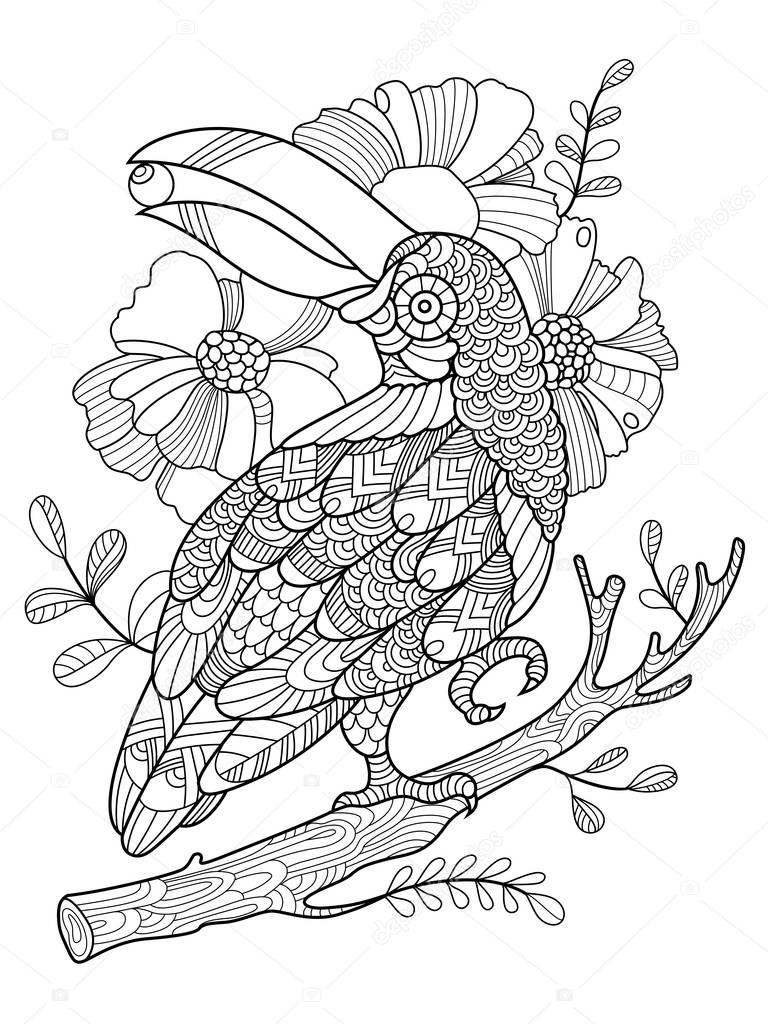 Aves de tucán para colorear libro de vectores adultos — Archivo ...
